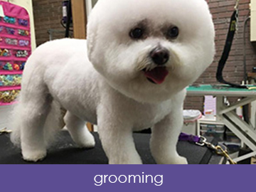 Specializing In Dog Grooming And Doggy Daycare For More Than 25